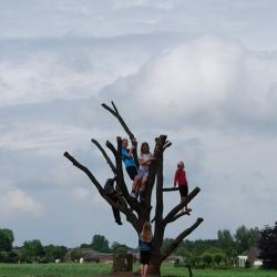 Een boom vol